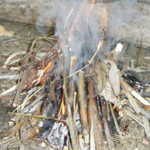 Team Bushcraft Survival Activity